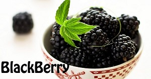 Blackberry Premium E-Liquid